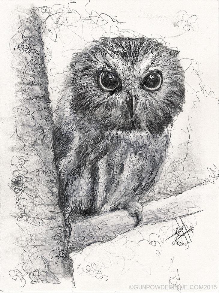 Owl for Liz Osman W730